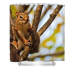 Squirrel On High Shower Curtain by Cheryl Baxter