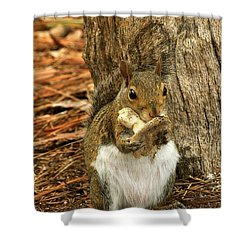 Squirrel On Shrooms Shower Curtain by Rick Frost