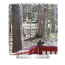 Shower Curtain featuring the photograph Squirrel Waiting by Pamela Hyde Wilson