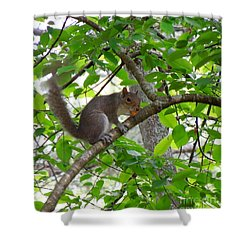 Shower Curtain featuring the photograph Squirrel With Candy by Renee Trenholm