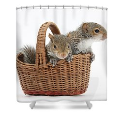 Squirrels In A Basket Shower Curtain by Mark Taylor