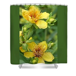 St John's-wort Shower Curtain by Bruce Bley