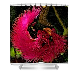 St Kitts Flora Shower Curtain by Cindy Manero