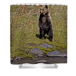 Shower Curtain featuring the photograph Standing Grizzly by J L Woody Wooden