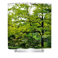 Standing Tall  3 Shower Curtain
