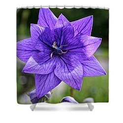 Star Balloon Flower Shower Curtain by Susan Herber