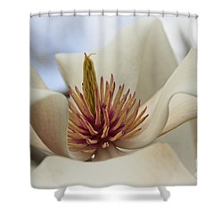 Star Magnolia Shower Curtain by Benanne Stiens