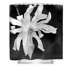 Star Magnolia Shower Curtain by Lisa Phillips
