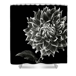Shower Curtain featuring the photograph Starburst Dahlia In Black And White by Endre Balogh