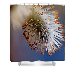 Starburst Shower Curtain by Susan Capuano