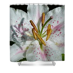 Shower Curtain featuring the photograph Stargazer Lily by Lynn Bolt