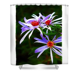 Shower Curtain featuring the photograph Stars Of Spring by Judi Bagwell