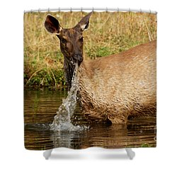 Shower Curtain featuring the photograph Startled by Fotosas Photography