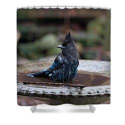 Shower Curtain featuring the digital art Steller Jay In The Birdbath by Carol Ailles