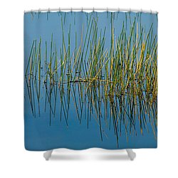 Still Water And Grasses Shower Curtain by Rich Franco