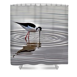 Shower Curtain featuring the photograph Black-necked Stilt by Tam Ryan