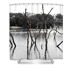 Stomps Of Trees In A Lake Shower Curtain