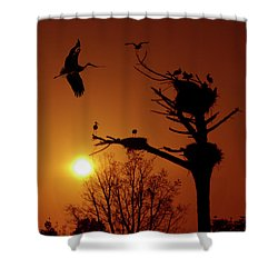 Storks Shower Curtain by Carlos Caetano