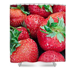 Strawberry Delight Shower Curtain by Sherry Hallemeier
