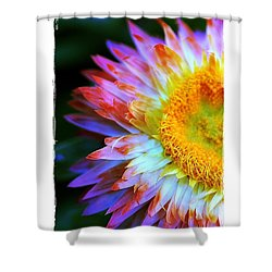 Shower Curtain featuring the photograph Strawflower by Judi Bagwell