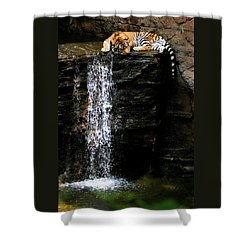 Strength At Rest Shower Curtain by Angela Rath