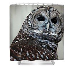 Striped Owl Shower Curtain by LeeAnn McLaneGoetz McLaneGoetzStudioLLCcom