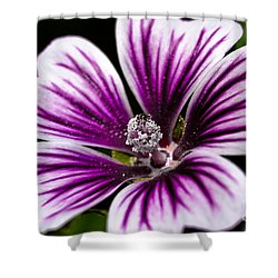 Shower Curtain featuring the photograph Stripped Blossom by Larry Carr