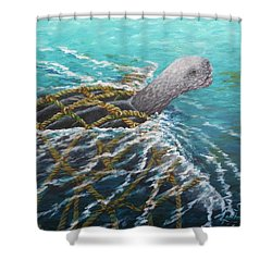 Struggle -leatherback Sea Turtle Shower Curtain