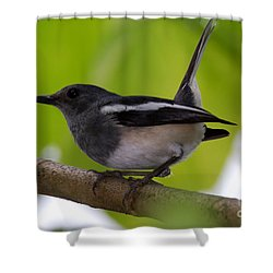 Shower Curtain featuring the photograph Study Of A Magpie-robin by Fotosas Photography