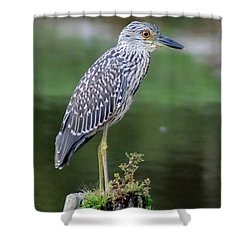 Stumped Night Heron Shower Curtain by Benanne Stiens