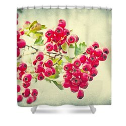 Summer Berries Shower Curtain by Angela Doelling AD DESIGN Photo and PhotoArt