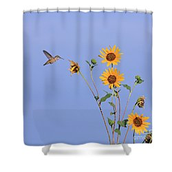 Summer Day Hummingbird Shower Curtain