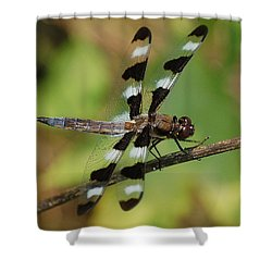Summer Dragonfly Shower Curtain