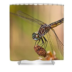 Summer Visitor Shower Curtain by Karol Livote