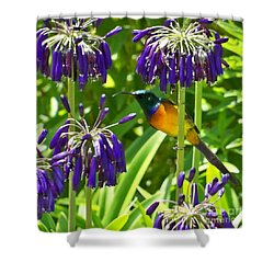 Shower Curtain featuring the photograph Sun Bird by Lynn Bolt