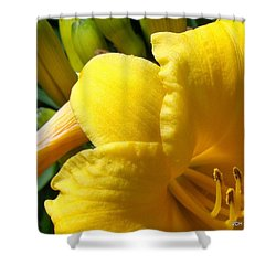 Sun Came Out Shower Curtain by Veronica Henson