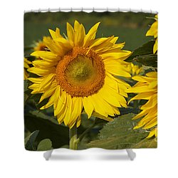 Shower Curtain featuring the photograph Sun Flower by William Norton