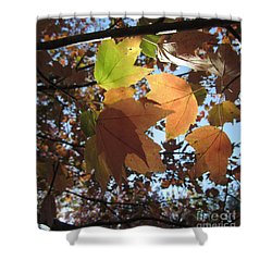 Shower Curtain featuring the photograph Sun-lite Fall Leaves by Donna Brown
