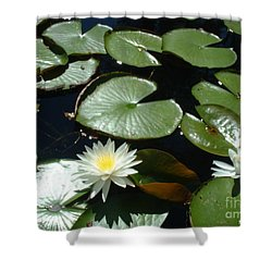Sun Lovers Shower Curtain by Mark Robbins