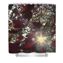 Shower Curtain featuring the photograph Sun Shine Through by Donna Brown