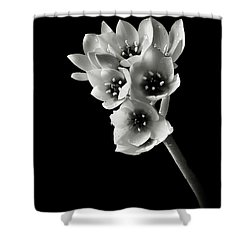 Shower Curtain featuring the photograph Sun Star In Black And White by Endre Balogh