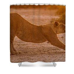 Sun Stretch Shower Curtain