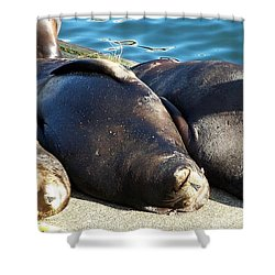 Shower Curtain featuring the photograph Sunbathing Sea Lions by Chalet Roome-Rigdon