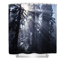Sunbeams Through Pine Trees Shower Curtain by Natural Selection Craig Tuttle
