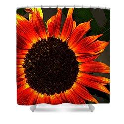 Sunfire Shower Curtain by Ramona Johnston