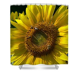 Sunflower 4 Shower Curtain by EricaMaxine  Price