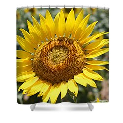 Shower Curtain featuring the photograph Sunflower by Donna  Smith