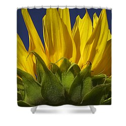 Sunflower Shower Curtain by Garry Gay