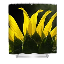 Sunflower Greeting The Morning Shower Curtain