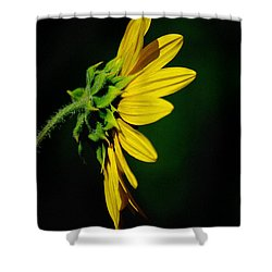 Shower Curtain featuring the photograph Sunflower In Profile by Vicki Pelham